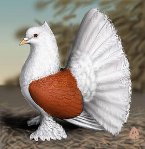 JAMROCK BIRDS , CAGES & ACESSORIES